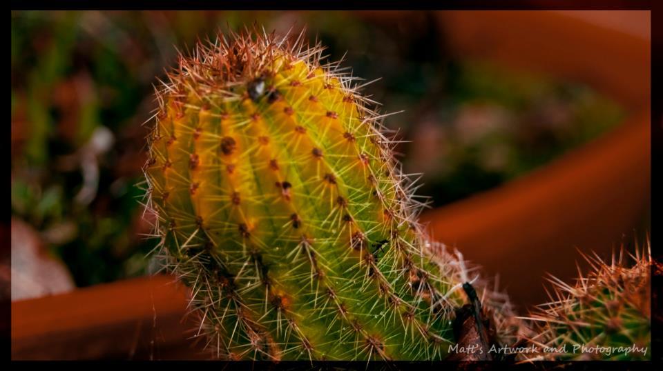 """""""Cactus No. One"""""""